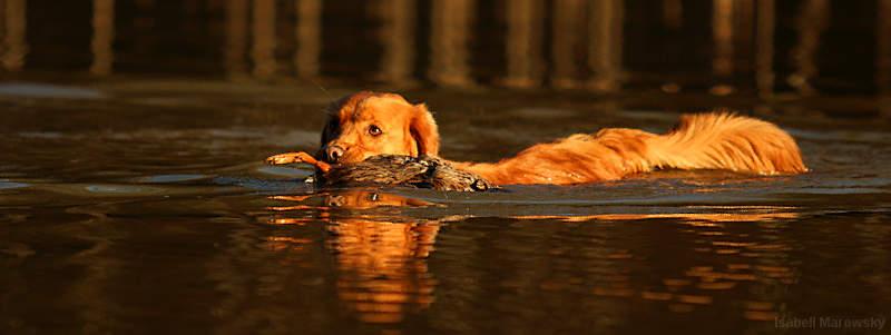 Toller beim Wasserapport von Isabell Marowsky